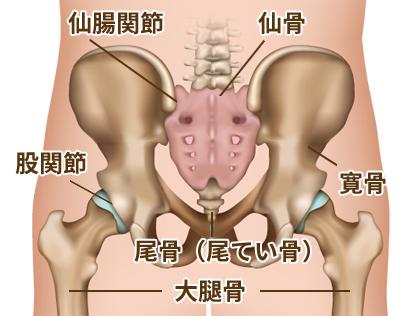 尾骨(尾てい骨)