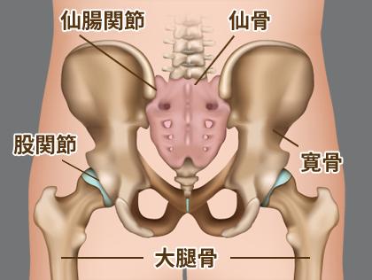 仙骨(仙腸関節)